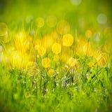 Teste padrão da grama verde Fotografia de Stock Royalty Free