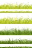 Teste padrão da grama verde no fundo branco Fotografia de Stock Royalty Free