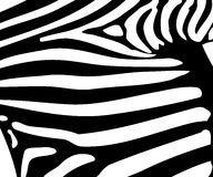 Teste padrão da listra da zebra Fotos de Stock Royalty Free