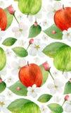 Teste padrão da maçã da aquarela Foto de Stock