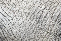 Teste padrão da natureza da pele do elefante Fotos de Stock Royalty Free