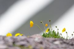 Teste padrão da neve da flor Fotos de Stock Royalty Free