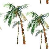 Teste padrão da palma da aquarela Imagem de Stock Royalty Free