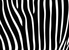 Teste padrão da pele da zebra Fotografia de Stock