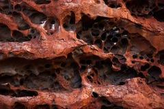 Teste padrão da rocha de Uluru Foto de Stock