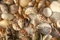 Teste padrão da textura da concha do mar Fotografia de Stock Royalty Free
