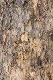 Teste padrão da textura do fundo da casca de árvore Fotos de Stock Royalty Free