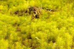 Teste padrão da textura do fundo do assoalho da floresta do Horsetail Imagens de Stock
