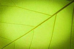 Teste padrão da textura da folha Foto de Stock