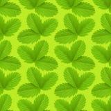 Teste padrão da textura da folha da morango Ackground da planta foto de stock