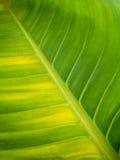 Teste padrão da textura da folha para o fundo, o ambiente e o ecol da mola Fotos de Stock Royalty Free