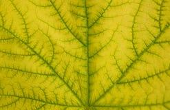 Teste padrão da textura da folha para o fundo da mola fotografia de stock