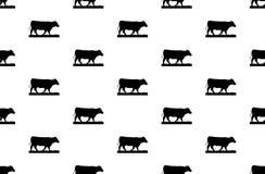 Teste padrão da vaca no fundo branco Arte da vaca no projeto branco do fundo Fotografia de Stock Royalty Free