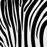 Teste padrão da zebra Foto de Stock