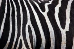 Teste padrão da zebra Imagens de Stock