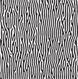 Teste padrão da zebra ilustração do vetor