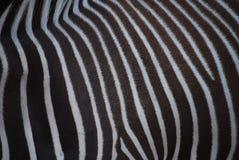 Teste padrão da zebra Imagens de Stock Royalty Free
