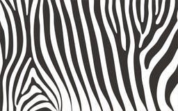 Teste padrão da zebra fotografia de stock royalty free