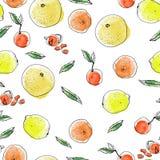 Teste padrão das citrinas do esboço da tinta e da aquarela no fundo branco Toranjas, laranjas alaranjadas, limões amarelos ilustração royalty free