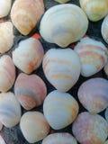 Teste padrão das conchas do mar Imagem de Stock