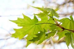 Teste padrão das folhas fotos de stock