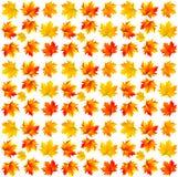Teste padrão das folhas de bordo amarelas Fotografia de Stock