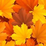 Teste padrão das folhas de outono Imagem de Stock