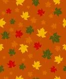Teste padrão das folhas de outono Fotos de Stock