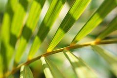 Teste padrão das folhas de palmeira Foto de Stock Royalty Free