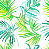Teste padrão das folhas de palmeira Teste padrão tropical sem emenda Foto de Stock Royalty Free