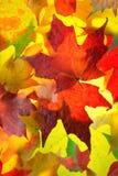 Teste padrão das folhas de plátano do outono Fotos de Stock