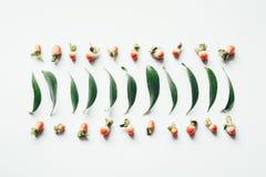Teste padrão das folhas e das bagas Fotografia de Stock