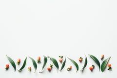 Teste padrão das folhas e das bagas Fotografia de Stock Royalty Free