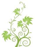 Teste padrão das folhas e das videiras do verde Fotografia de Stock Royalty Free