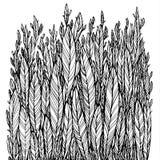 Teste padrão das folhas pretas, grama, penas Imagens de Stock Royalty Free