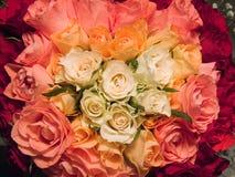 Teste padrão das rosas Imagens de Stock Royalty Free