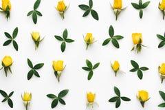 Teste padrão das rosas amarelas Fotografia de Stock