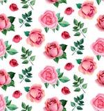 Teste padrão das rosas da aquarela sem emenda Imagens de Stock