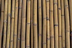 Teste padrão de bambu Fotografia de Stock