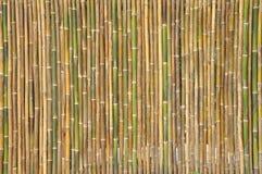 Teste padrão de bambu para o fundo Imagem de Stock