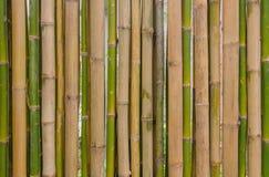 Teste padrão de bambu verde da textura do fundo da cerca Fotografia de Stock