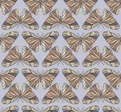 Teste padrão de borboletas coloridas Fotos de Stock