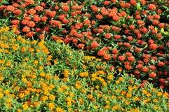 Teste padrão de conjunto vermelho e amarelo da flor da cor Imagens de Stock Royalty Free