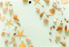 Teste padrão de escudos e de estrelas do mar em pálido - fundo azul imagem de stock