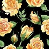 Teste padrão de flor amarelo das rosas do chá-híbrido do Wildflower em um estilo da aquarela ilustração do vetor
