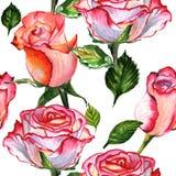 Teste padrão de flor cor-de-rosa do Wildflower em um estilo da aquarela isolado ilustração do vetor