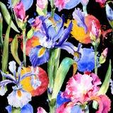 Teste padrão de flor da íris do Wildflower em um estilo da aquarela ilustração royalty free