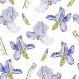Teste padrão de flor da mola ilustração stock