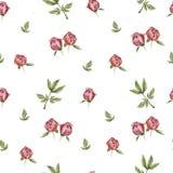 Teste padrão de flor da peônia Fotos de Stock