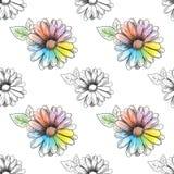 Teste padrão de flor Desenho de uma camomila da cor Vetor Imagem de Stock